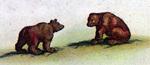 Bears - New Netherlands & New England