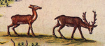 Deer - New Netherlands & New England by Willem Blaeu