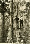Lumbermen by WKU Library Special Collections